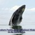 bebe ballena Agostop 13